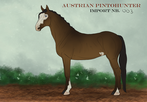 Austrian PintoHunter Import_003|CLOSED by CalyArt