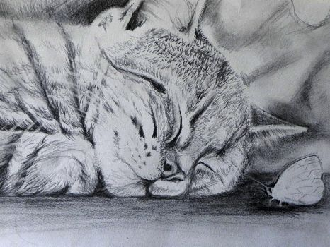 Soft Kitty Warm Kitty by philippeL