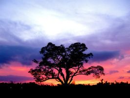 A tree and a sunset by RandyErdman