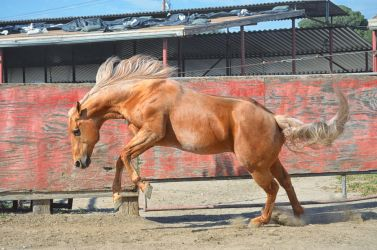 DWP FREE HORSE STOCK 57 by DancesWithPonies