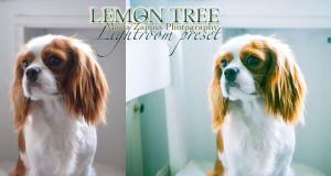 Lemon Tree Lightroom Preset by MartaLilita