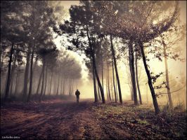 Morning fog in the forest by guillermocarballa