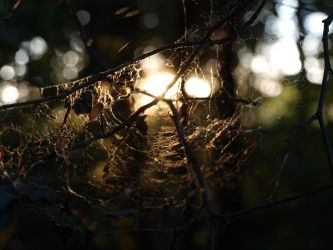 The Cobweb by a-Winterstorm