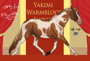 Yakimi Warmblood Import #037 by Weidenhof