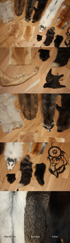 - closeups -TAXIDERMY FOR SALE by seriousbadger
