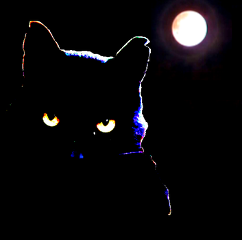 Cat in the moonlight by Lucieff