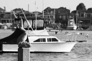 Pelican On The Dock by MasterC88
