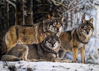 Wolf pack by Azany