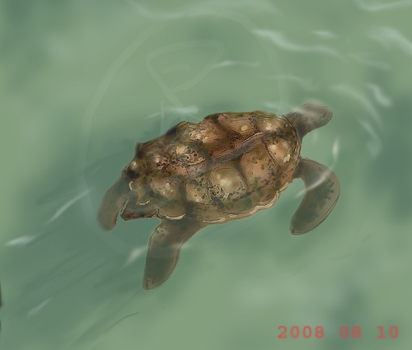 Mr. Turtle by SpilledCoffee