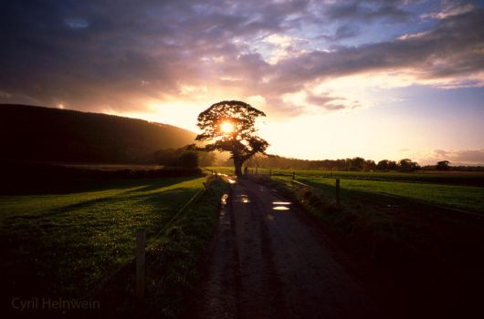 Sun Tree by Cyril-Helnwein
