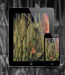 Tall grass wallpaper promo by Justinlite