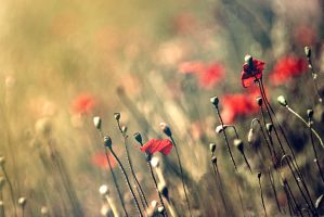 Red beauty by Milie-Photography