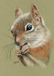 A Little Squirrelly by mbeckett