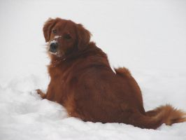 Francis the Snow Dog by FantasyStock