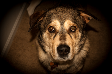 Portrait of A Dog by AnthonyMiller