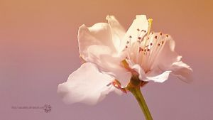 A Fragile Moment by XanaduPhotography