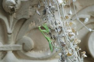 Green Mantis, White Pillar by sankyaku