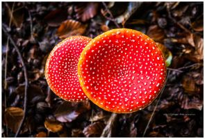red hot white dot by corniger-aries