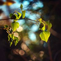 Ivy Leaves by incolor16