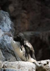 Siesta on the rocks by Elaihr