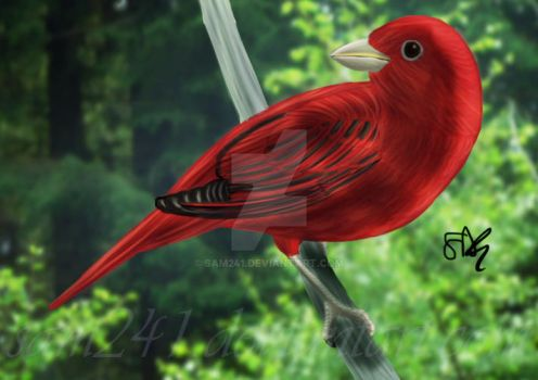 Red Tanager by sam241