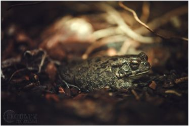 Toad by RemusSirion
