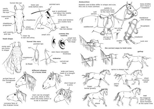 How to draw the horse 2 - Eng by Elruu