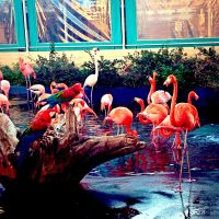 Flamingo's by xXXxNightShadexXXx
