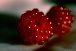 Nature's Jewels by Vigg