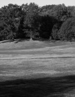 Dying Grass, Prospect Park 2 by icompton01