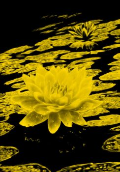 water lily in gold tones by Vilenchik