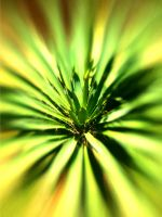 Lensbaby iPhoneography CCXLV by LDFranklin
