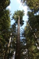 Hoh Rainforest Tall Trees by seancfinnigan