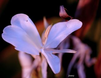 flower in cooling filter by jcphotos