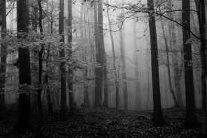 Misty woods by Thrym982