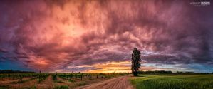 Cloud into pink by NorbertKocsis