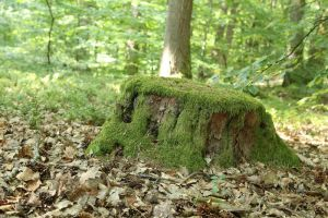 Mossy log Stock 13 by Malleni-Stock