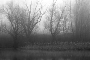 Silence in The Swamp by s-ascic