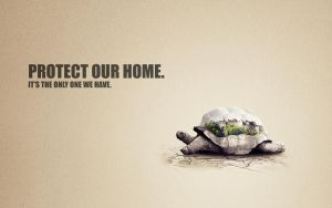 turtle wallpaper by T3hSpoon