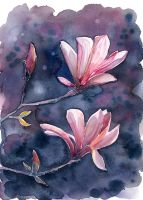 Magnolia, watercolor painting by jane-beata
