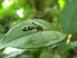 Green Fly by juvieira