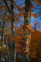 Fall by BlackRoomPhoto