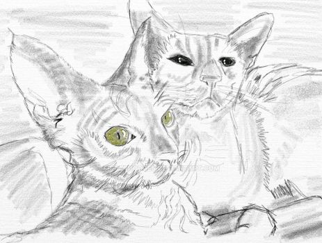 Devon Rex and Siamese by KateHodges