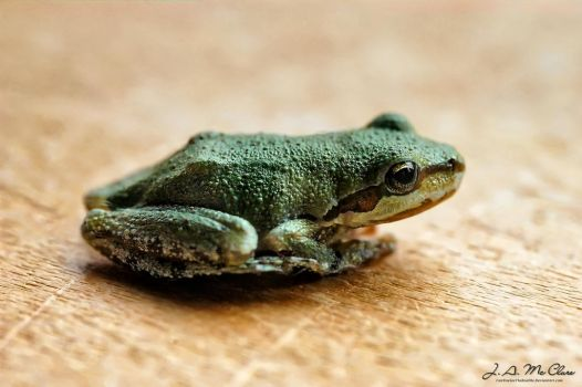 Tree Frog II by CanYouSeeTheRealMe