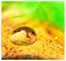 drop.... by Serend1pity