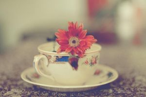 Tea for one by Cochalita