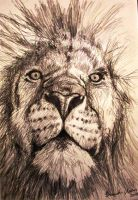 Lion by cleophus