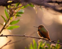 Watching the morning by isotophoto
