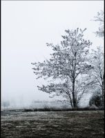 winter tree by PaulinaPat