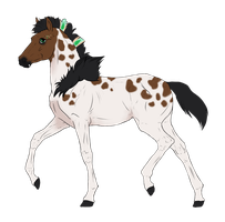 N2914 Padro Foal Design for KaitlyNicole by casinuba